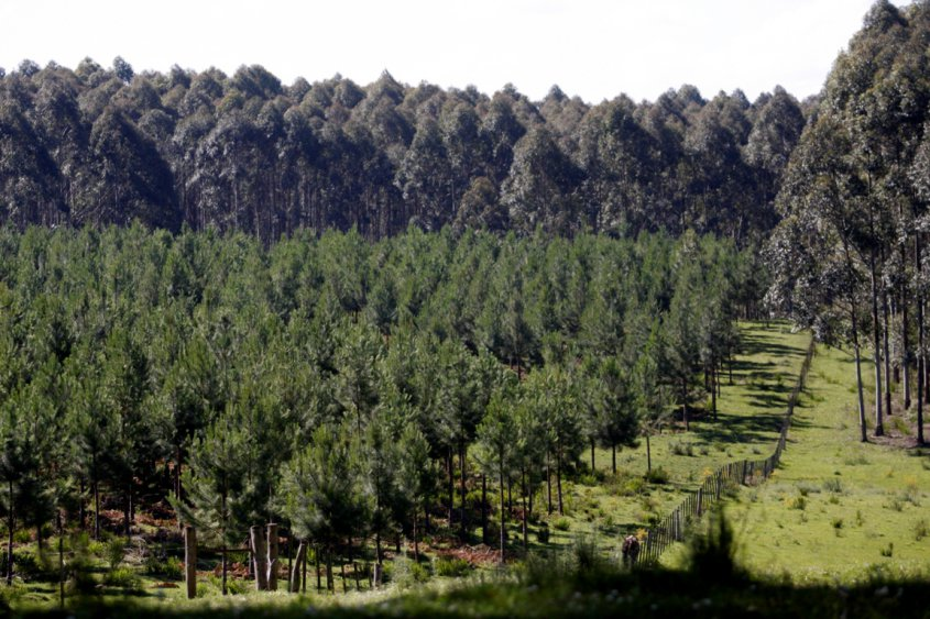 Grafica alusiva a Las políticas gubernamentales sobre incentivos forestales