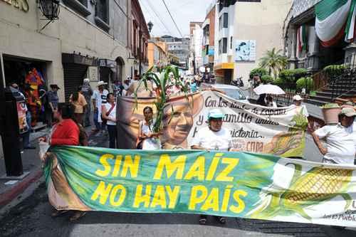 Grafica alusiva a Taller sobre estrategias comunitarias frente a la contaminación transgénica del maíz nativo. Ciudad de México, abril 4 a 8 de 2005