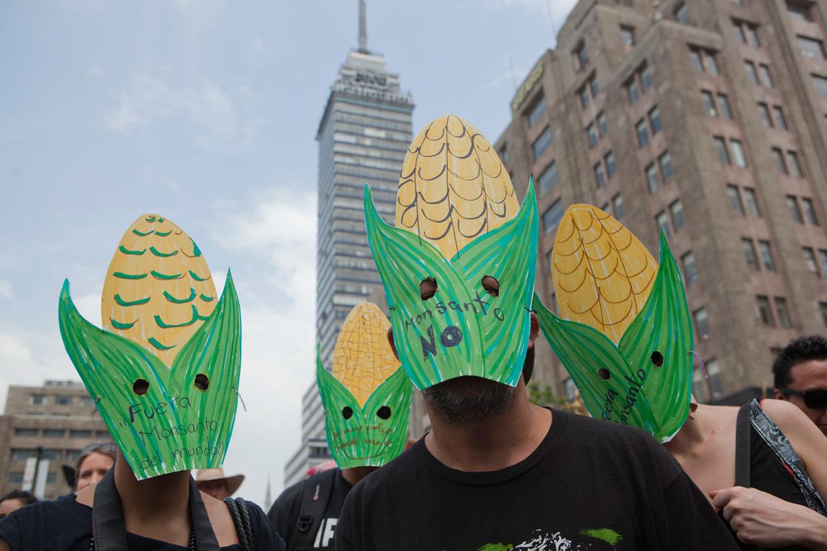 Grafica alusiva a Defender nuestro maíz, cuidar la vida
