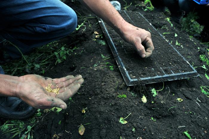 Grafica alusiva a Anotaciones sobre la experiencia de bancos de semillas en Antioquia