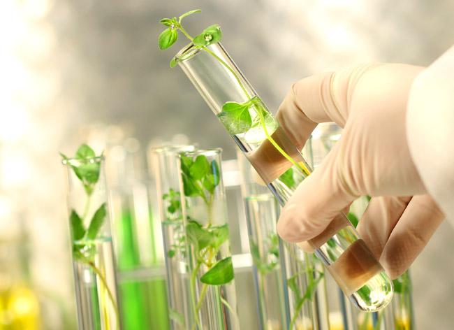 Grafica alusiva a Medicina tradicional, patentes y biopiratería
