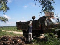 Grafica alusiva a Misión internacional de verificación sobre la situación ocasionada por los agrocombustibles en Colombia: Palma aceitera y caña de azúcar