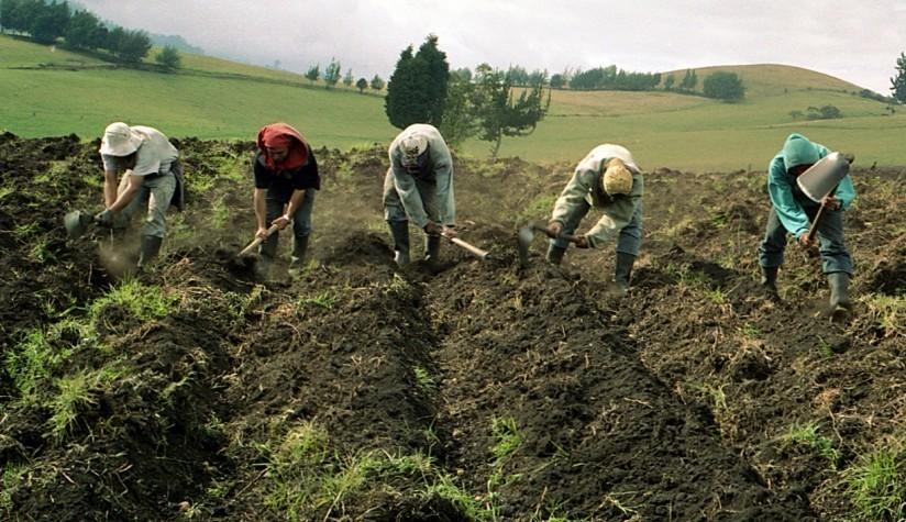 Grafica alusiva a Reflexiones sobre el Incoder y la institucionalidad agraria en Colombia