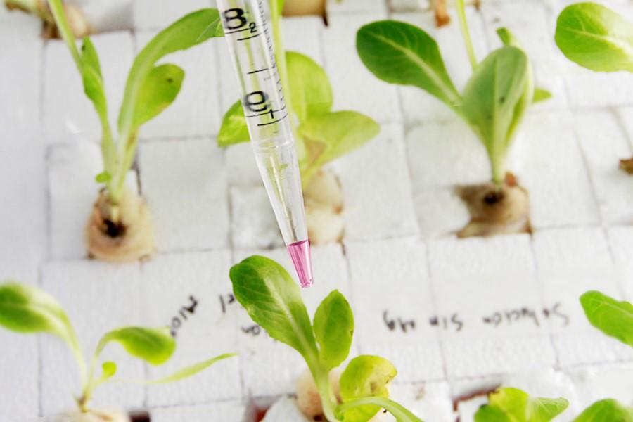 Grafica alusiva a La biotecnología no es una solución al hambre en el mundo