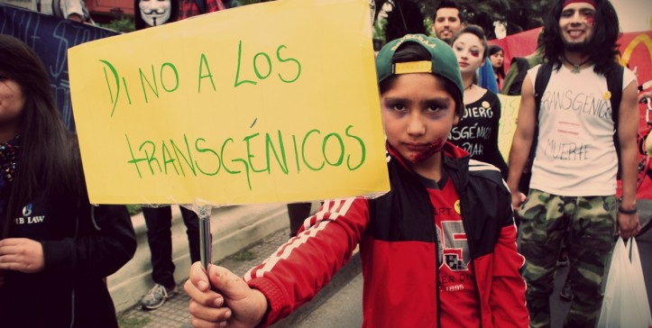 Grafica alusiva a Avanza la primera Acción Popular en contra de los transgénicos