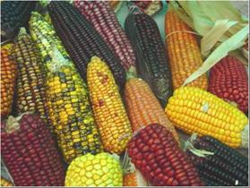 Grafica alusiva a Declaración del Encuentro Nacional Crisis alimentaria en Colombia, Acciones sociales para la defensa de la soberanía y autonomía alimentaria