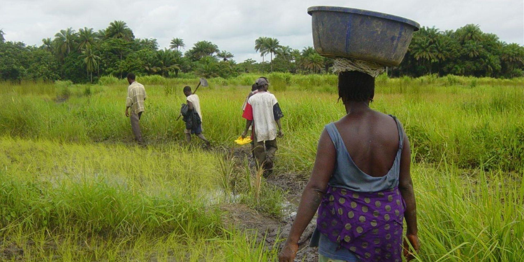 Grafica alusiva a Los faros agroecológicos: una propuesta integradora de la cultura afrocolombiana(1)