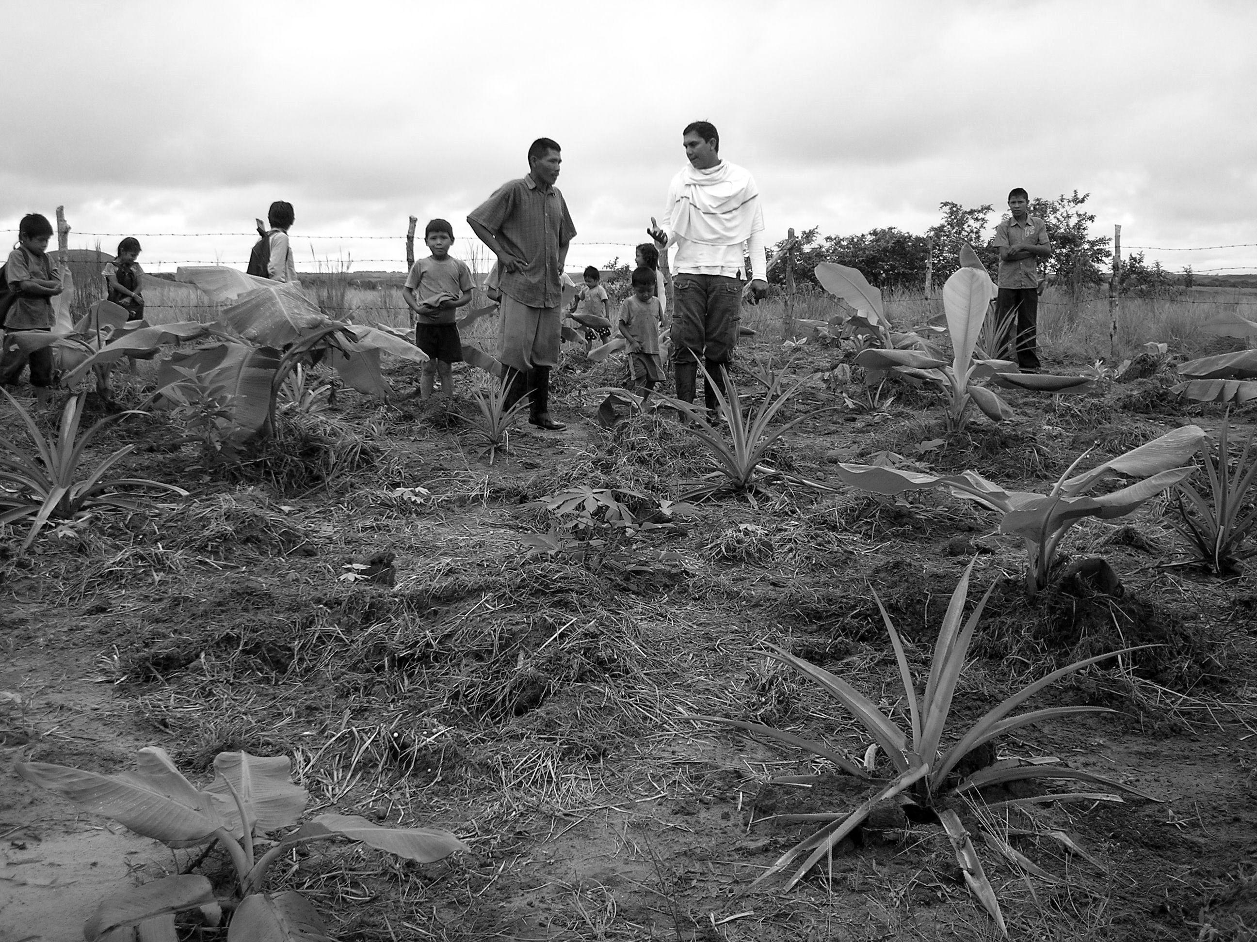 Grafica alusiva a La Cosmopolitana: Recuperación del alimento y las culturas ancestrales en la Altillanura colombiana