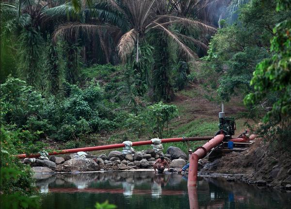 Grafica alusiva a Agrocombustibles: Una vía para el despojo de las tierras y la inseguridad alimentaria de los campesinos del centro-oriente de Colombia (Sur de Bolívar)
