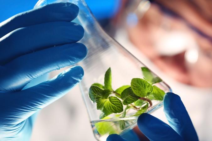 """Grafica alusiva a Los nuevos """"Business Plans"""" de la bioprospección, la biotecnología y la investigación científica"""