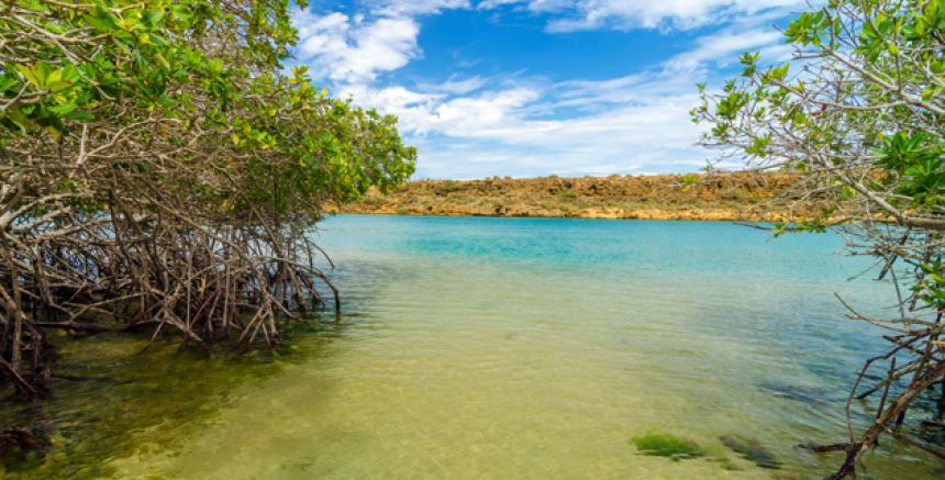 Grafica alusiva a Un problema por abordar. Los manglares del Caribe colombiano