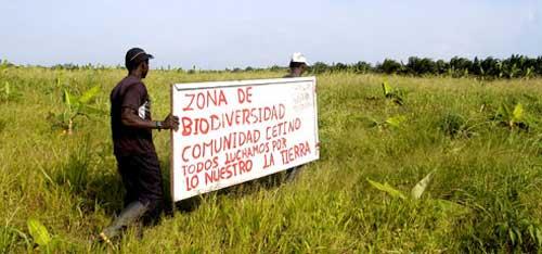 Gráfica alusiva a Palma Africana en Colombia: Impactos ambientales  socioeconómicos y  efectos sobre la tenencia de la tierra, en comunidades campesinas, negras e indígenas.