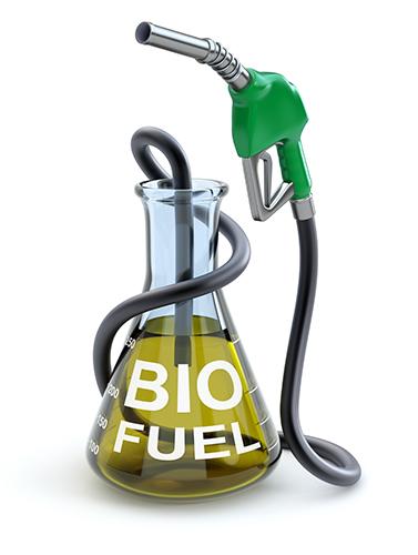 Gráfica alusiva a Programa biodiesel sostenible para Antioquia. Desarrollo de la opción de Jatropha Curcas