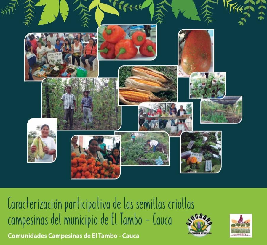 Gráfica alusiva a Caracterización participativa de las semillas criollas campesinas del municipio de El Tambo - Cauca