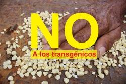 Grafica alusiva a Diez razones para decirle NO a los trangénicos