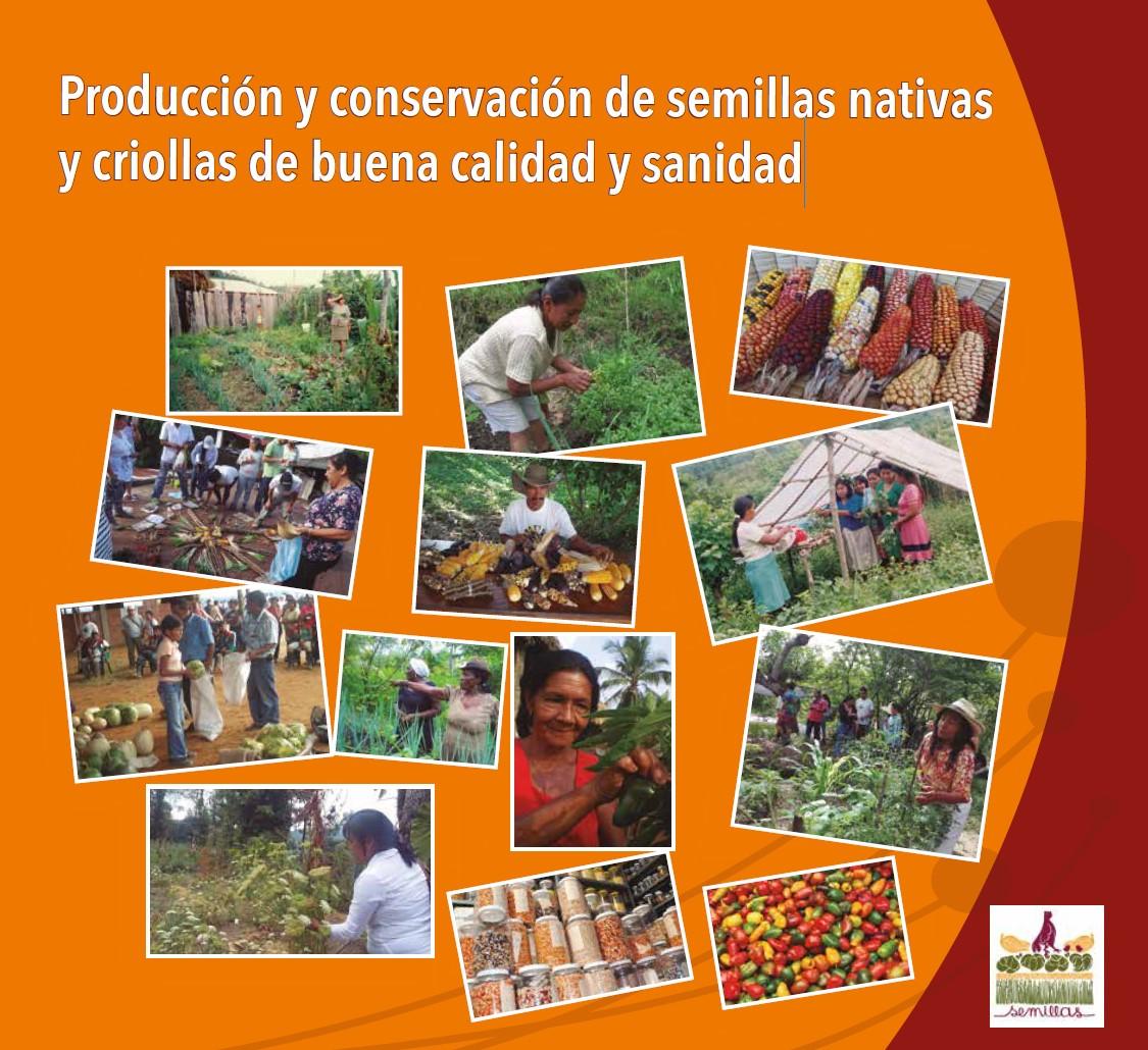 Gráfica alusiva a Producción y conservación de semillas nativas y criollas de buena calidad y sanidad