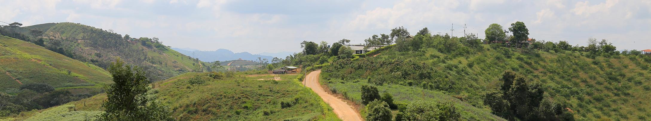 Grafica a lusiva a  Aprovechamiento de los productos forestales no maderables del bosque, como una estrategia de reconciliación amazónica