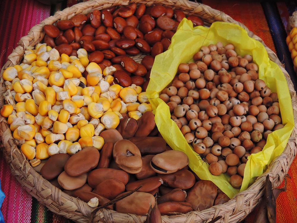 Gráfica alusiva a La norma sobre semillas criollas que pretende expedir el Ministerio de Agricultura en el marco de los Acuerdos de Paz