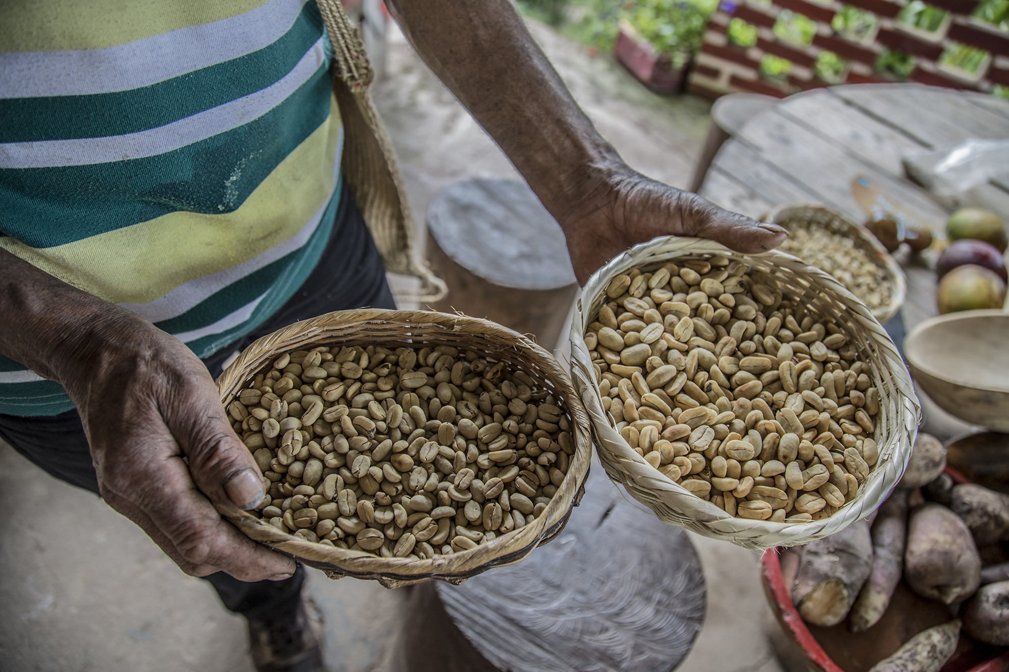 Grafica alusiva a La norma sobre semillas criollas que pretende expedir el Ministerio de Agricultura, en el marco de los Acuerdos de Paz