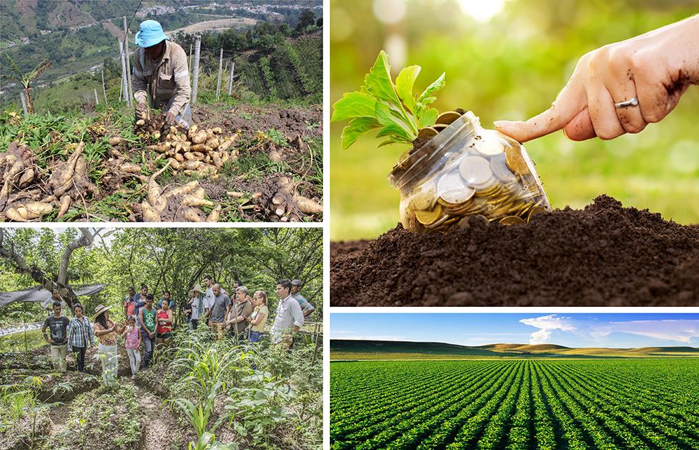 Grafica alusiva a Proyecto de Ley de Innovación Agropecuaria, en el marco de la implementación del Acuerdo de Paz
