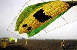 Gráfica alusiva a Alimentos modificados genéticamente seguros o peligrosos